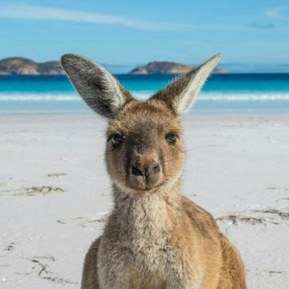 All about Australia