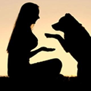 索女Dog Come - sokneoi.com
